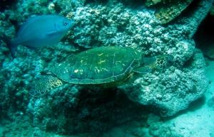 turtle & friend